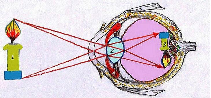 Построение изображения на сетчатке глаза